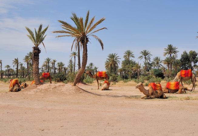 Palmeraie Marrakech